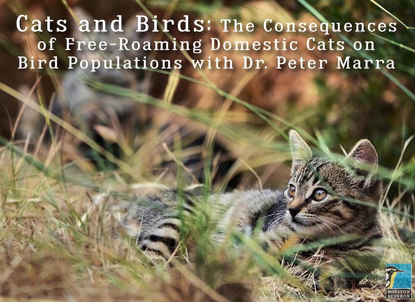 Houston Audubon - Cats and Birds