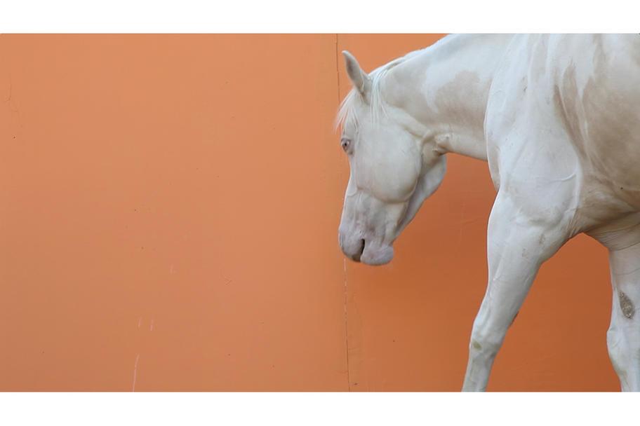 CounterCurrent 18 - Horse Dream Horse