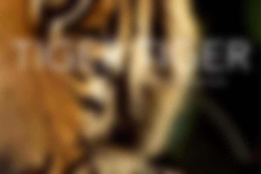 FotoFest - Tiger Tiger