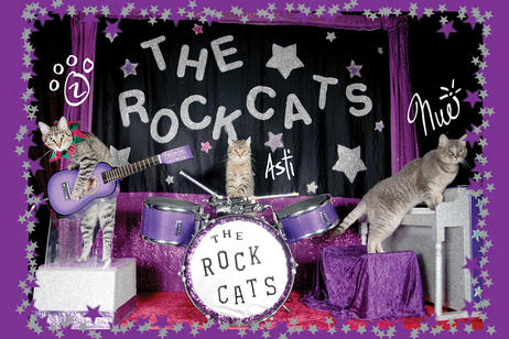 The Amazing Acrocats