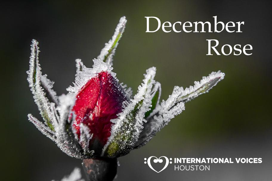 IVH - December Rose